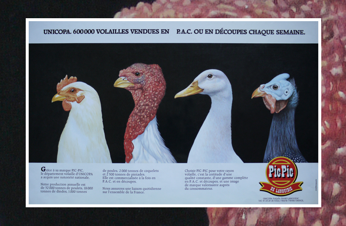 Poultry Advert